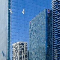 Отражения и чайки.... (Торонто) :: Юрий Поляков