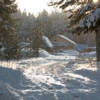 В лесу... :: Sergey Apinis