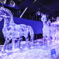 Ледовый фестиваль :: Лариса Лунёва