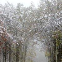 В городском саду туман :: Сергей Тарабара