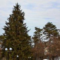 В парке :: Александр Смольников