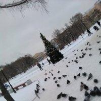 Елка в Юсуповском сада. (январь 2017 год). :: Светлана Калмыкова