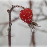 мороз :: Юлия Карпович