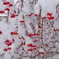 После большого снега :: Андрей Буховецкий