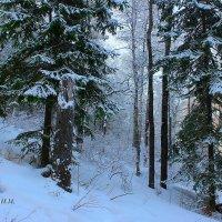 Сказочный лес. :: Наталья Юрова