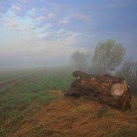 Встреча в тумане :: Валерий Кишилов