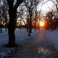 Зимнее утро :: Наталья Гринченко