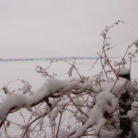 На Днепре - лед :: Наталья Гринченко
