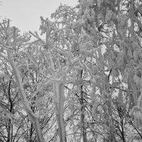 Зимой :: Александр Степовой