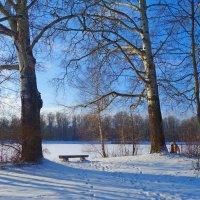 Мороз и солнце; день чудесный!... :: Galina Dzubina