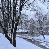 Зимняя природа. :: zoja
