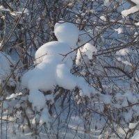 Снежный зверь :: Ольга