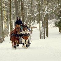 Лошадки зимой  /1/ :: Сергей