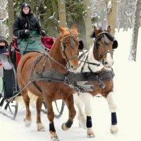 Лошадки зимой  /3/ :: Сергей