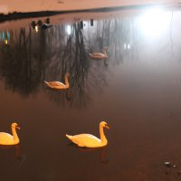 зимнее озеро... :: Aleksandr Kaziniets