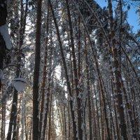 Тропинка в зимнем парке :: Сергей Тагиров