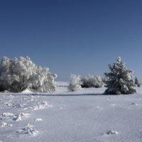 январь :: павел бритшев