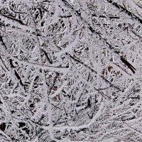 Узоры зимы! :: Наталья