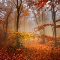 В гостях у осени любимой... :: Victor Lebed