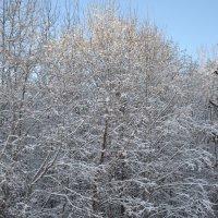мороз... :: Светлана