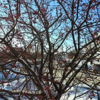 Мороз крепчает,а на душе весна !!!! :: bemam *