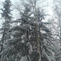 Зимний день :: Сапсан