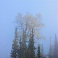 В густом тумане :: Сергей Чиняев