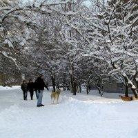 Зимний сюжет :: Татьяна Смоляниченко