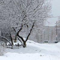 Заметает зима... :: Татьяна Смоляниченко