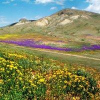 весенний цветочный остров... :: viton