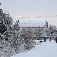 Зима в Подмосковье :: Светлана Ларионова
