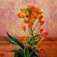 Оранжевые цветочки :: Nina Yudicheva