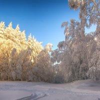 Солнечная поляна :: vladimir Bormotov