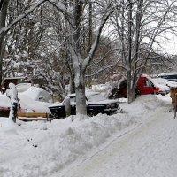 Снежный январь 2015 года :: Татьяна Смоляниченко