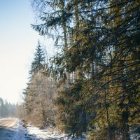 Зимний лес :: Алёнка Шапран