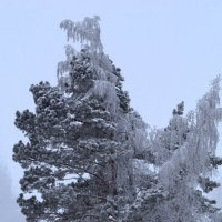 Зимнее настроение :: Татьяна Соловьева