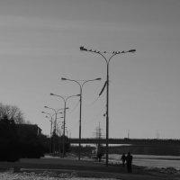 Птичья стайка  на проводах. :: Татьяна