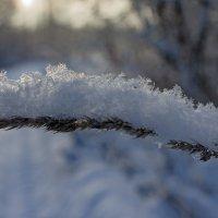 Снежный колосок. :: Ольга Лиманская