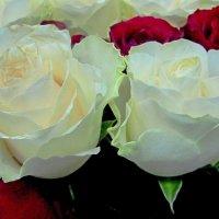 Букет из 101-ой розы :: Сергей Карачин