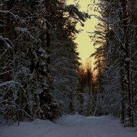 В лес... туда где душа отдыхает! :: Елена Третьякова