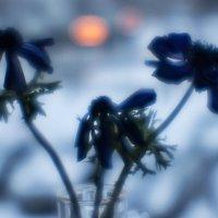 Фиолетовые сны #3 :: Анатолий Бастунский