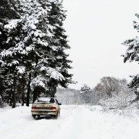 Сон зимнего леса(2) :: Марта Маркова
