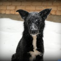 Друг, не дай замерзнуть... :: Андрей Заломленков