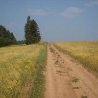Поле дорога :: Александр Попков