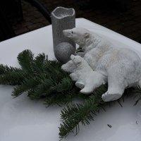 белый мишка :: kuta75 оля оля