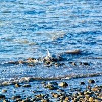 чайка в море) :: Oksana Verkhoglyad
