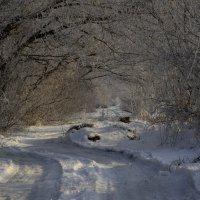 Зимушка, зима... :: Ольга Степанова