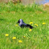 Важная птица :: Nina Yudicheva