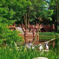 Из жизни пеликанов :: Nina Yudicheva