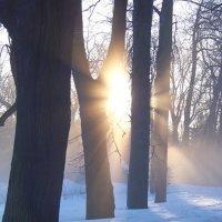 Сквозь деревья... :: Miko Baltiyskiy